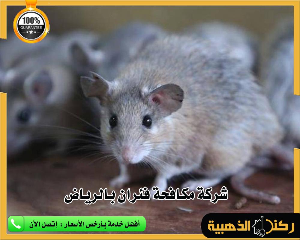 مكافحة فئران بالرياض
